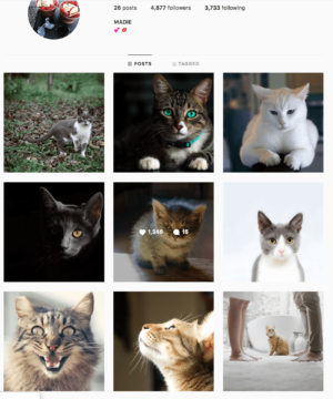 Buy a Cats Account with Real Followers and Usernames. We have the best instagram accounts for sale, check our reviews from previous buyers on our accounts on sale. You won't regret it!