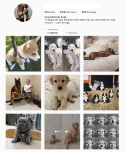 Buy a Dogs Account with Real Followers and Usernames. We have the best instagram accounts for sale, check our reviews from previous buyers on our accounts on sale. You won't regret it!