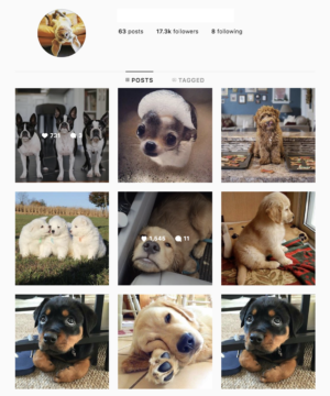 Buy a Dogs Model Account with Real Followers and Usernames. We have the best instagram accounts for sale, check our reviews from previous buyers on our accounts on sale. You won't regret it!