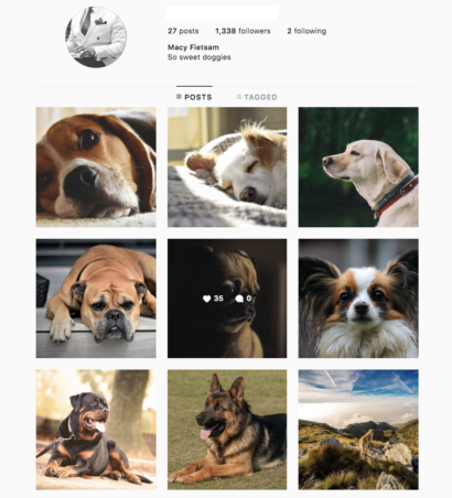 Buy Dogs Instagram Accounts with Real Username and Engagements. See our 5 star Reviews on our Google Business Page. Instagram Accounts for Sale