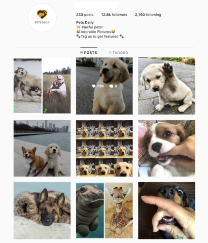Buy Animals Instagram Account with Real Engagements and Followers. Buy with confidence as we delivery our Instagram Account for sale instantly! No wait!