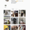 Buy Animals Instagram Account with Real Followers and Engagements. See our 5 star Reviews on our Google Business Page. #1 Trusted Instagram Account Seller