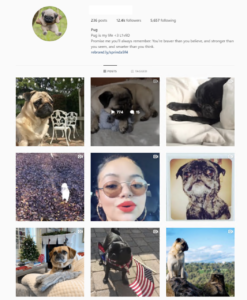 Buy Animals Instagram Account with Real Followers and Engagements. See our 5 star Reviews on our Google Business Page. #1 Trusted Instagram Account Sellera