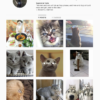 Buy Cat Instagram Accounts with Real Usernames and Engagements. See our Reviews on our Google Business Page. #1 Trusted Instagram Account Seller