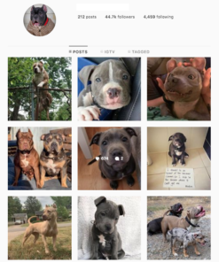 Buy Dogs Lifestyle Instagram Accounts with Real Usernames and Engagements. See our Reviews on our Google Business Page. #1 Trusted Instagram Account Seller