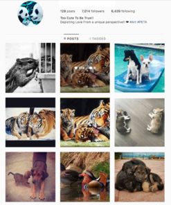 Buy Animals Account with Real Followers and Usernames. We have the best instagram accounts for sale, check our reviews from previous buyers on our accounts on sale. You won't regret it!