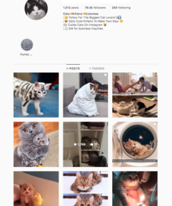 Buy Cats Instagram Accounts for sale