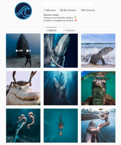 Buy Ocean Instagram Accounts for Sale