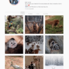 Buy a Nature Instagram Account with Real Followers and Engagements. See our 5 star Reviews on our Google Business Page. #1 Trusted Instagram Account Seller